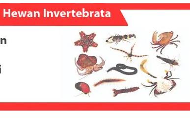 Invertebrata-Pengertian-Karakteristik-Klasifikasi-Contoh